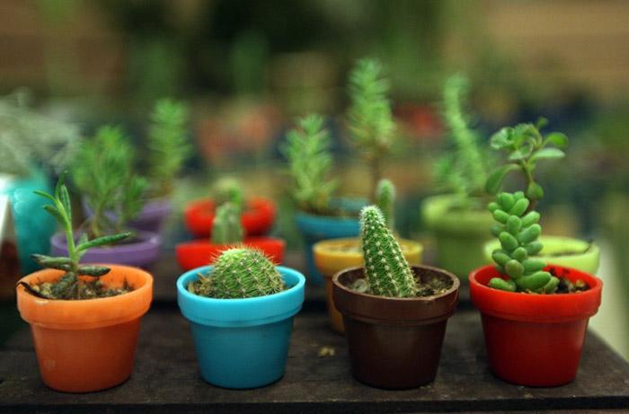 gol طراحی وب سایت پرورش گل و گیاه با اچ تی ام ال html
